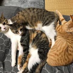 LIMIAペット同好会/にゃんこ同好会/猫のいる暮らし ピタっとはまっております♪