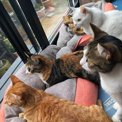 LIMIAペット同好会/ニャンコ同好会/猫のいる暮らし