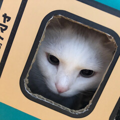 LIMIAペット同好会/にゃんこ同好会 3月3日はエリーちゃんの誕生日! 保護猫…(1枚目)