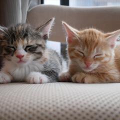 うちの子自慢/にゃんこ同好会 こちらも(元)保護猫。 三女と四女。この…