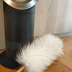 Dyson タワーファンdyson Pure Cool AM11WS ダイソン 扇風機(空気清浄機)を使ったクチコミ「羽根なし扇風機のホコリ取りって みなさん…」