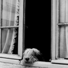 犬/ワンちゃん/窓/パリ/おでかけワンショット パリに行ったときの1枚。 セーヌ川のほと…