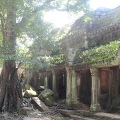 カンボジア/世界遺産/アンコールワット/自然の力/森/はじめてフォト投稿 カンボジア アンコールワット 自然の力の…