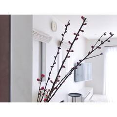 リビングインテリア/リビング/花のある暮らし/梅の花/インテリア/ひな祭り/... 念願の枝もの٭❀*梅の花をお迎えしました…