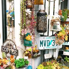 多肉紅葉/mygarden/多肉植物好き/gardening/ガーデン雑貨/garden:time/... 今日はいい天気🌞でした。 明日から天気悪…