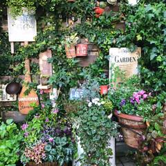 garden:time/gardening/garden/ガーデンカフェ風☕️/LIMIA/花のある暮らし/... 玄関前コーナーの寄せ植え 緑に癒されます🍀