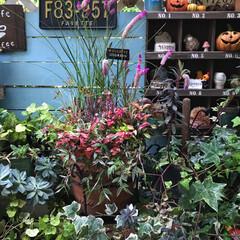 LIMIA/秋の寄せ植え/寄せ植え/デッキガーデン/ガーデニング/ガーデン/... ハロウィン🎃雑貨をちょっと飾って 秋の寄…