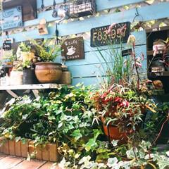 ガーデン/LIMIA/癒しの場所/デッキガーデン/ガーデニング/リミアな暮らし/... デッキガーデン🍀 こちらは多肉植物や日陰…