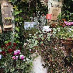 ガーデン/mygarden/ガーデニング/garden:time/DIY/暮らし いい〜お天気でした🌞 コロナはやく収まる…