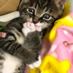 子猫/うちの子自慢 笑ってるみたいで可愛い💕