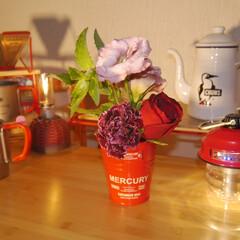 キャンプ/キャンプギア/キャンプ用品/bloomeelife/花のある生活/花が好き/... キャンプギアとお花💐 . 本日、我が家の…