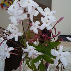 ジャスミン/リラックス ジャスミンのお花 これだけでも、部屋中香…