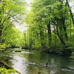 奥入瀬渓流/新緑/おでかけワンショット 奥入瀬渓流の新緑