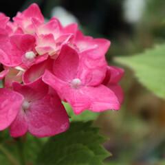 令和元年/わたしのお気に入り/はじめてフォト投稿/令和元年フォト投稿キャンペーン 祖母のお庭は植物がたくさん🌱 大好き場所…(1枚目)