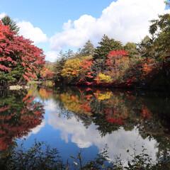 雲場池/軽井沢/紅葉/秋/おでかけ 昨日は雲場池に行ってきました♪  お天気…