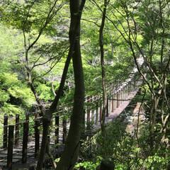 綺麗/自然/癒し/おでかけワンショット/風景/おでかけ 花貫渓谷の吊り橋。この季節には綺麗な緑の…