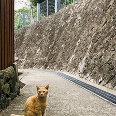男木島/猫/島の風景/おでかけワンショット 猫島での1枚