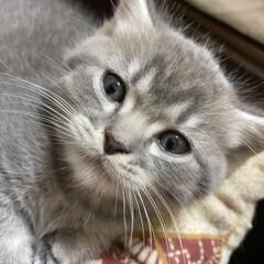 仔猫/ねこ/にゃんこ/マンチカン オイラの名前はえむたんに決まったにゃ😸え…(1枚目)
