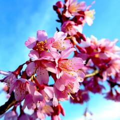 お出かけ/春 春の訪れ②