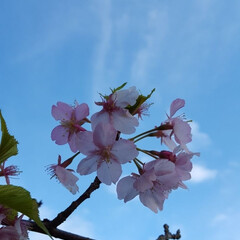 お出かけ/春 春の訪れ①