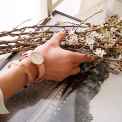 danielwellington/ダニエルウェリントン/時計/フラワーシーズン/期間限定/CherryBlossom/... この春、Daniel Wellingto…