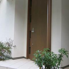 タイル/坪庭 白という色をタイルや漆喰の白でまとめ清潔…
