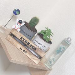 サボテン/DIY/棚/ダイソー/緑のある暮らし 最近マイブームなサボテンです🌵 緑を部屋…