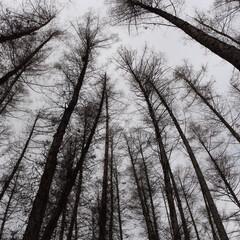 富良野/森の時計/ニングルテラス/令和初日/おでかけワンショット 令和初日5/1の富良野、森の時計の木々の中