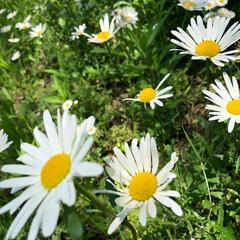 おでかけワンショット すてきなお花