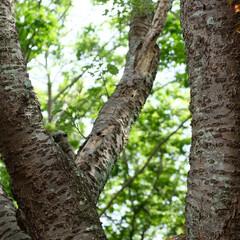リス/鎌倉/自然/動物/おでかけワンショット 何処かにいるリスをあなたは見つけられます…
