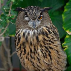 初投稿/ミラーレス一眼/ミミズク/掛川花鳥園/はじめてフォト投稿 GWに掛川花鳥園に行った時に撮影。撮影し…