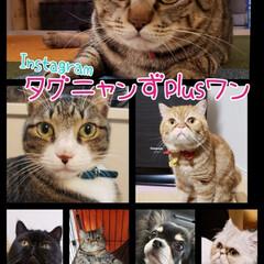 熊本/猫好き仲間募集/保護ねこ/ペルシャ猫/チワワ/エキゾチックショートヘア/... うちの子達です♡