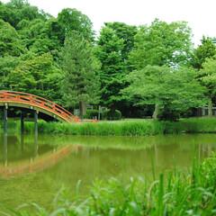 池/橋/緑/称名寺/はじめてフォト投稿 赤い橋を緑が覆っている様子を撮りました。…