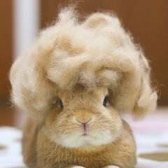 LIMIAペット同好会 地毛です。