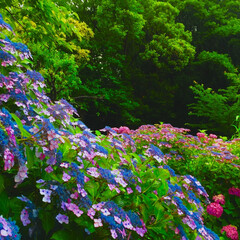おでかけワンショット 紫陽花の山
