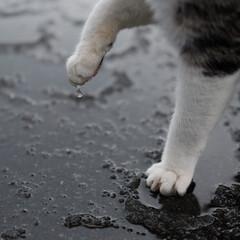 秋田県/漁港/象潟/港猫/雫/わたしのお気に入り 秋田県の象潟漁港。1月の冬空で雨と雪が混…