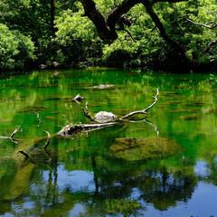 福島県/裏磐梯/五色沼/湖/新緑/わたしのお気に入り 新緑を写した五色沼。