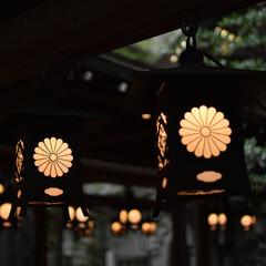 氷川神社/川越/おでかけワンショット 氷川神社で撮った一枚 歴史を感じる写真に…