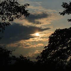 夕日/散歩/公園/木/植物/雲/... 『 お散歩帰りの夕日 』   ふと左を見…