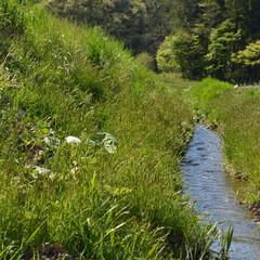 水路/水/自然/植物/緑/はじめてフォト投稿 田舎の水路  水がきれいです!