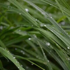 雨/葉/緑/草/雨季ウキフォト投稿キャンペーン 『 はっぱのすべりだい 』  小雨で、 …