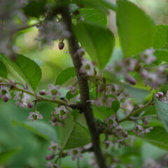 花/木/植物/葉/雨季ウキフォト投稿キャンペーン 木に花が咲きました!  アリさん達が こ…