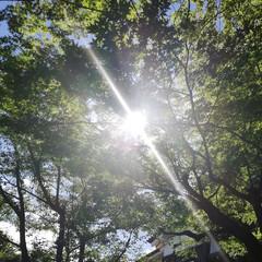 はじめてフォト投稿/犬山城/木陰/青空/初夏/太陽の光/... 電車旅で愛知県の犬山城に行ったのですが、…