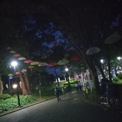 千葉公園/みんなにおすすめ みんなにおすすめしたい千葉公園です 春は…