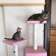 うちの子ベストショット/cats/子猫/にゃんこ/ねこ/キジトラ/... まだなんとなーく慣れないんだけど  にぴ…