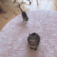 サバトラ/キジトラ/ねこ/cutecat/cat/うちの子自慢/... 茶衣さんが晴空に 襲われる0.5秒前😹💙…