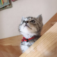 にゃんこ/愛猫/猫/はじめてフォト投稿/LIMIAペット同好会/にゃんこ同好会/... 晴空(はく)にゃん😺✨💙  この顎のとこ…
