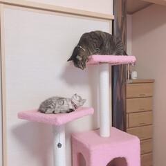 子猫/うちの子ワンショット/うちの子ベストショット/うちの子自慢/にゃんこ/愛猫/... アイコンタクト😽😽❤️💙