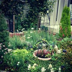 ビオトープ/ジャンクガーデン/イングリッシュガーデン/ナチュラルガーデン/ガーデニング/グリーン/... 玄関側のミニ庭✨