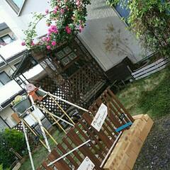 薔薇/イングリッシュガーデン/ナチュラルガーデン/ジャンクガーデン/ガーデンフェンス/ガーデニング/... 部屋を片付けて撤去したすのこでフェンスを…